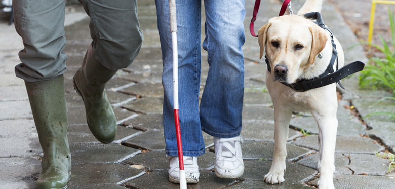 Can I make a discrimination claim if I am refused access to a service with my assistance dog?